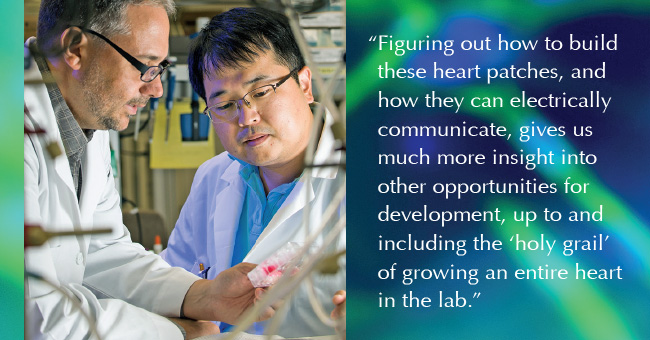 The research of Drs. Jeffrey Jacot and Seokwon Pok revolves around production of a bioscaffold material seeded with living heart cells designed ultimately to promote the growth of healthy new heart tissue.